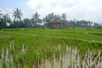 Peluang investasi tanah View Sawah lingkungan Villa di Sentral
