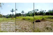 Tanah di Klusa payangan Bali Harga Per Are Nego