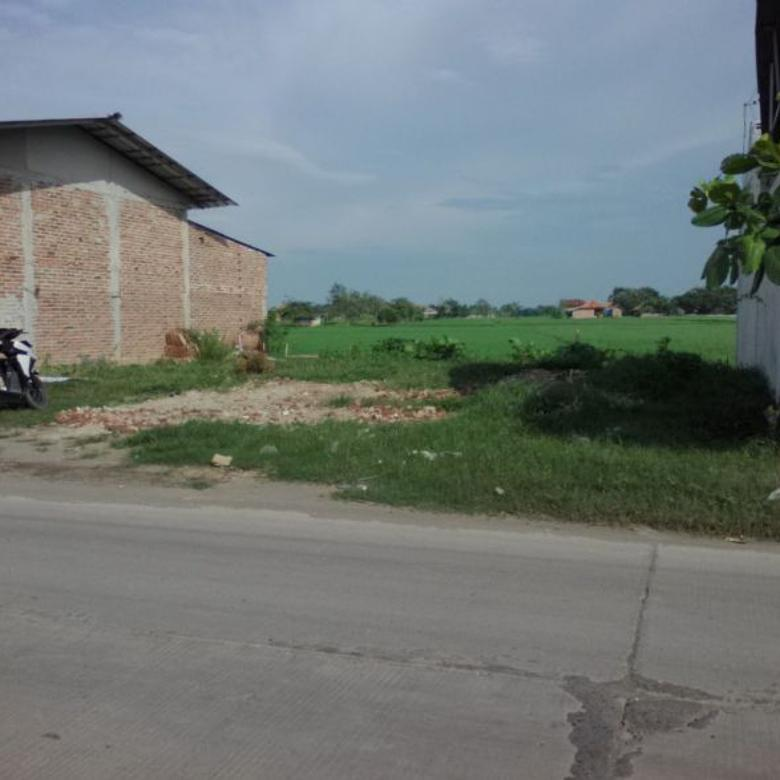 Tanah-Indramayu-3