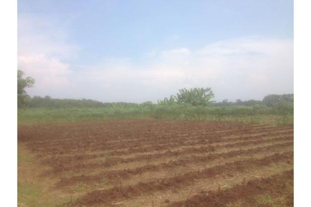 Rp170mily Tanah Dijual