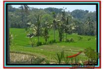 BUC, 10.000  m2 View  Sawah dan Gunung