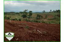 tanah kavling kebun buah lantaburro produktif