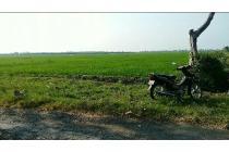 tanah peruntukan ternak,inves.dll