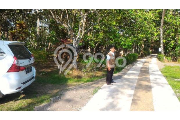 Dijual Tanah Murah suasana asri sudah SHM daerah keduren-purwodadi 13960796