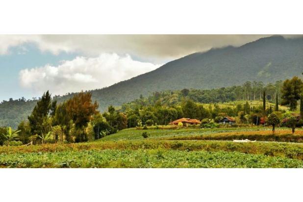 tanah kavling dijual di cugenang cipanas lokasi puncak 17699605