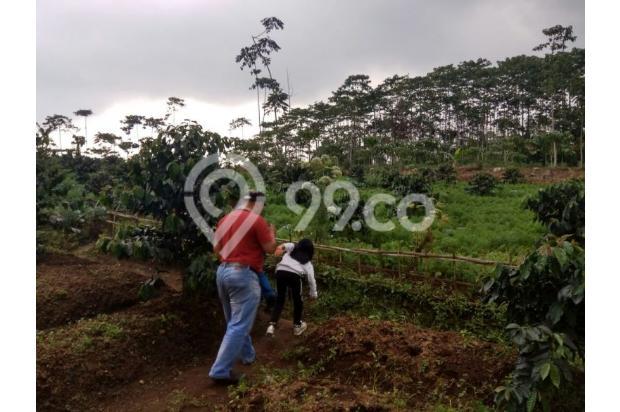 tanah kavling dijual di cugenang cipanas lokasi puncak 17699646