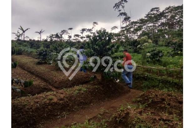 tanah kavling dijual di cugenang cipanas dekat puncak 17700190