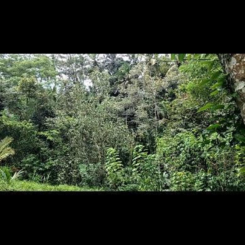 Tanah los sungai view jungle super keren di kliki