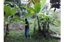 Tanah 450rb di Leuwi Gajah Cimahi