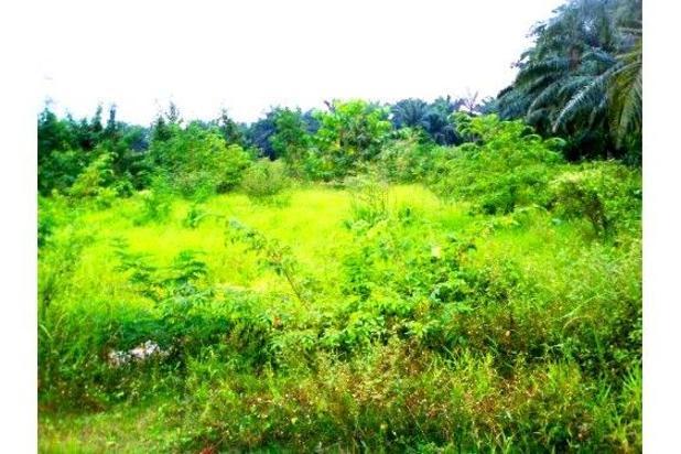Rp2,39mily Tanah Dijual