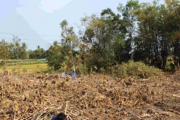 Perhatikan Site Depan Tanah Sebelum Beli Kaveling; Lebih 6 Meter Ideal 12898835
