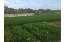 Land Freehold with Rice field view In great Location Nyambu Kediri Tabanan