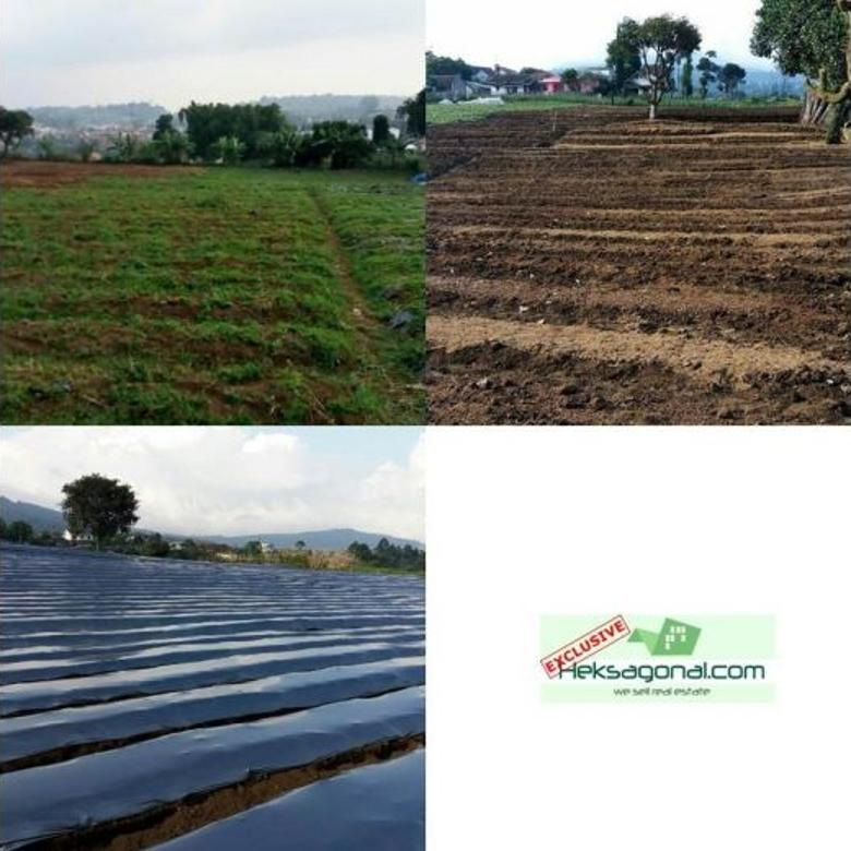 Tanah Datar Dijual Lembang Bandung Jawa barat HKS3283