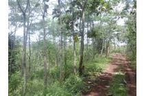 tanah dijual cibiuk garut dekat jalan raya hanya 100.000 per meter