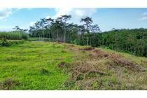 Tanah-Malang-1