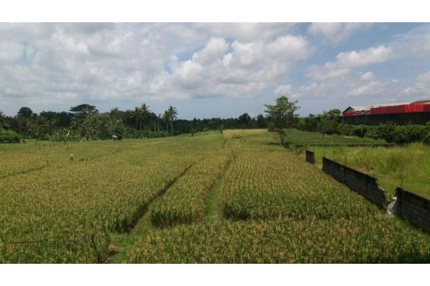 Rp176mily Tanah Dijual