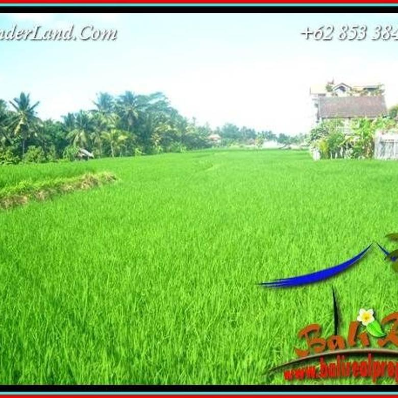 Beautiful Rice field View in Sentral Ubud