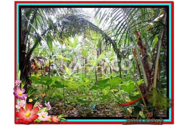 Lokasi Strategis view Fantastis, 1.000 m2 View Kebun di Ubud Tegalalang 3873232