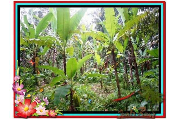 Lokasi Strategis view Fantastis, 1.000 m2 View Kebun di Ubud Tegalalang 3873233