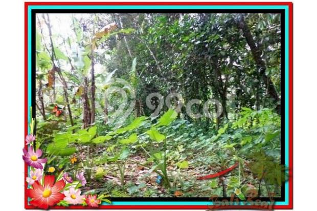 Lokasi Strategis view Fantastis, 1.000 m2 View Kebun di Ubud Tegalalang 3873235