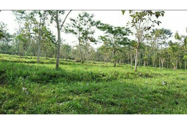 Tanah Murah cocok untuk perumahan di belakang Jatim Park 3 Beji Batu 13697141