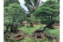 Tanah Raya Pesanggrahan Bintaro Super Strategis