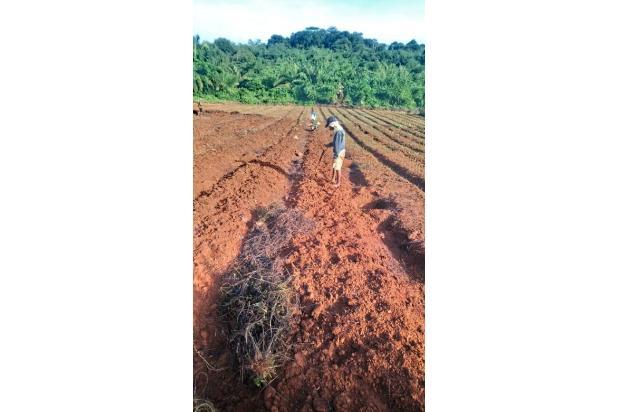 Rp137mily Tanah Dijual