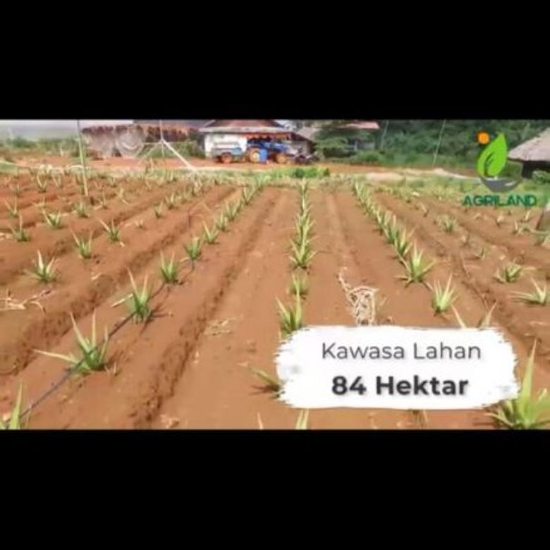 Tanah-Bogor-4