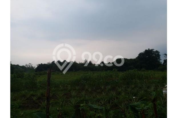 Dijual Tanah Murah Cisauk Luas 1 ha 17307301