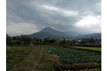 Tanah murah dan strategis dibelakang Balaikota Among Tani