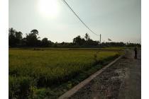 Tanah sewa Pura Tanah Lot Bali