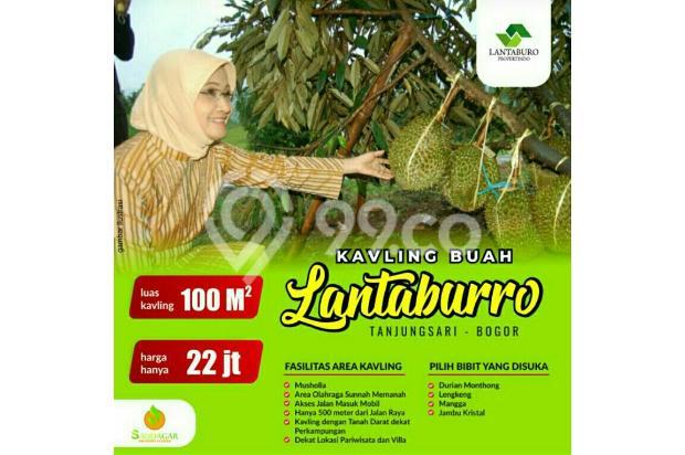 Kavling Produktif Murah Bogor 17149866