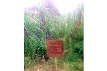 Dijual Tanah di Karya Sehati II, Karya Kasih, Titi Kuning.