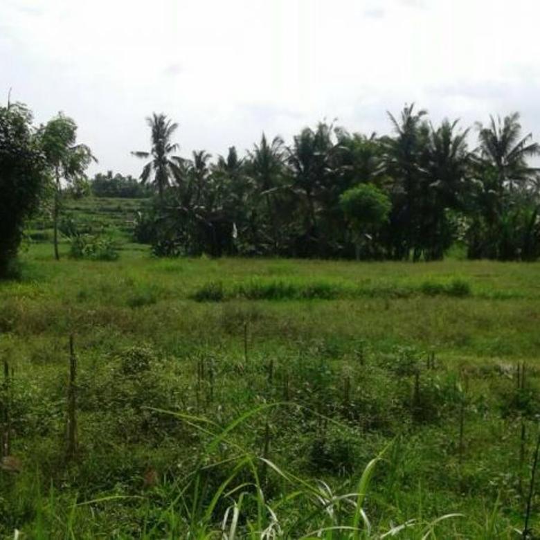 Dijual Tanah Raya Krasan , Bali Dekat Ubud Bisa Beli Per Bagian
