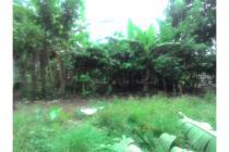 Tanah Kebun Kopi