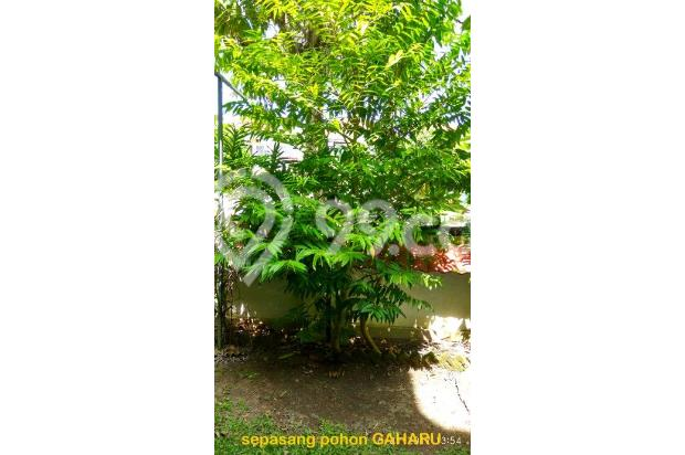 A Balinese styled FREEHOLD rare LANDED HOME in Dutamas Batam Indonesia 14803695