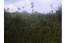 Dijual Tanah Cocok Untuk Gudang, Peternakan, VIla dan Perkebunan