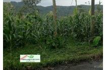 Tanah Dijual Biting kec limbangan kab kendal Jawa Tengah hks6209