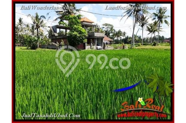 Potensial, 39 are di Ubud Pejeng 18273889