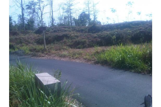 Jual Tanah Pasuruan Murah Nol Jln Desa (Aspal) Luas 1.1 Ha di Pasrepan