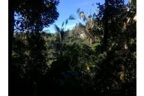 Tanah-Gianyar-15