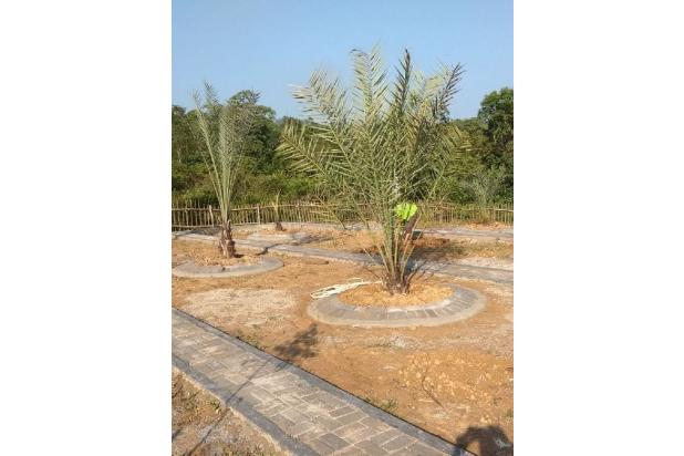 Kavling Tanah Syariah Kebun Kurma, Jahe, Gaharu 17341415