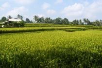 Tanah cantik View Sawah lingkungan Villa di Ubud Tegalalang LUBD667