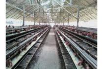 Dijual ternak ayam di palembang jalan arah betung km 18 Sumatera Selatan