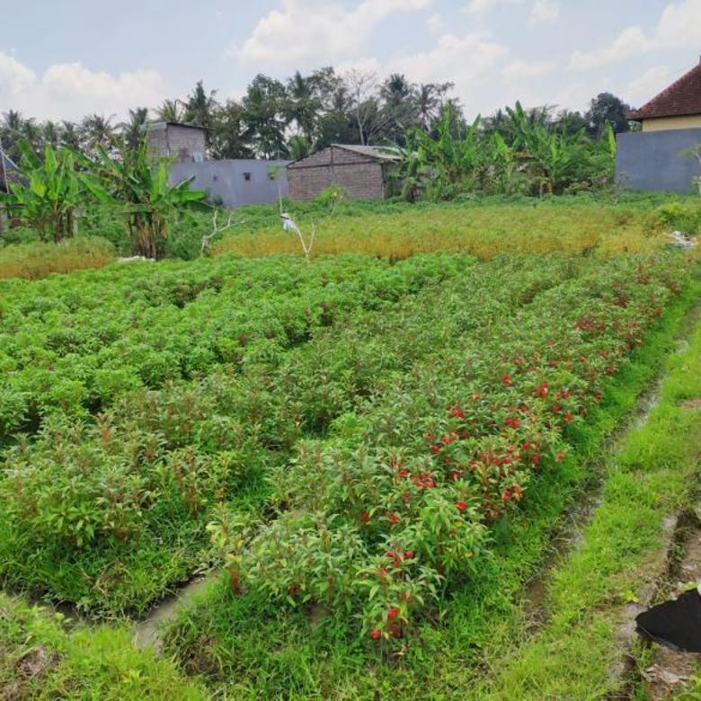 Tanah di Desa Baha, Mengwi