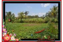 Strategis utk Investasi, 800 m2 View Sawah dan pangkung di Ubud