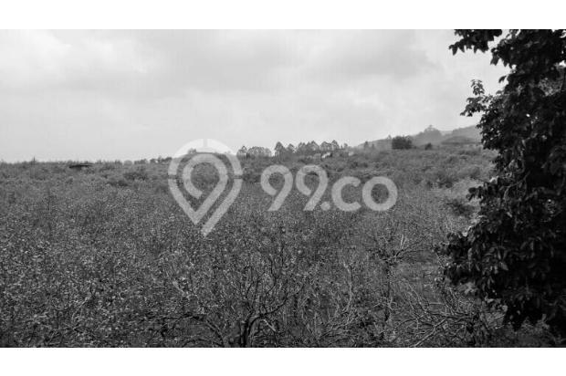 tanah perkebunan harga murah di sidomulyo batu 17342111