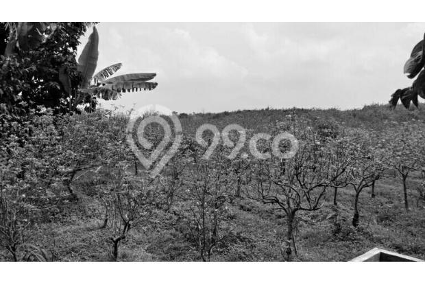 tanah perkebunan harga murah di sidomulyo batu 17342118