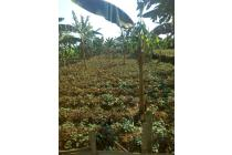 Dijual Butuh Lahan Perkebunan di Banjar Wangi Bogor