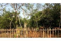 Tanah dijual area Jomin, Cikampek cocok untuk kebun, cluster, kontrakan/kos